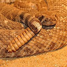 A Importância do Rápido Diagnóstico nos Acidentes por Serpentes Peçonhentas