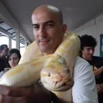 piton-albina-tocandira-gasparello